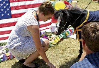 Miniature Therapy Horses Comfort Orlando Families